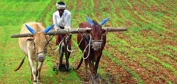 Rural-Indian-farmer-chattishgarh