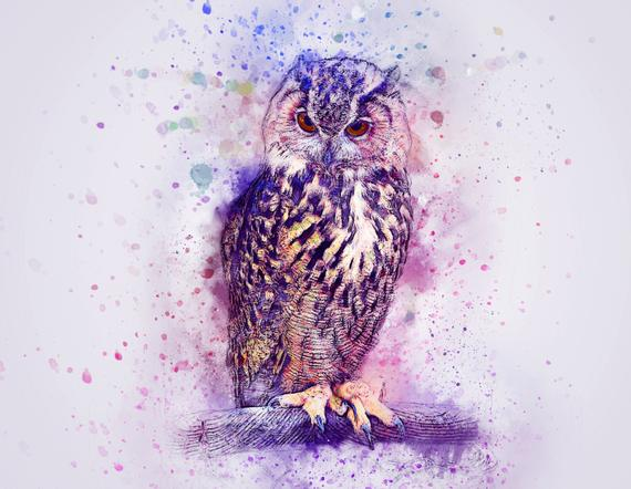 owl painting_independentnews